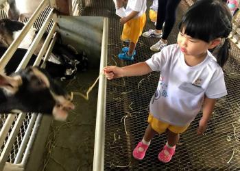 kingsford-waterbay-dairies-farm-2019-01