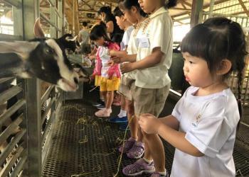 kingsford-waterbay-dairies-farm-2019-08