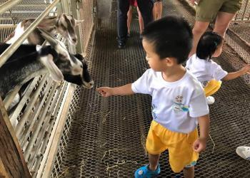 kingsford-waterbay-dairies-farm-2019-12