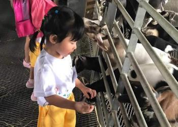kingsford-waterbay-dairies-farm-2019-14