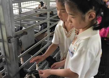 kingsford-waterbay-dairies-farm-2019-16