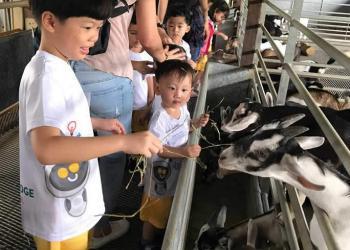 kingsford-waterbay-dairies-farm-2019-18